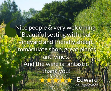 Review of our Vineyard